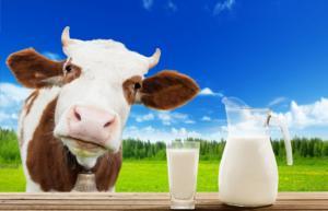 30 мая приглашаем на курсы повышения квалификации «Новые способы эффективной переработки молочного сырья и предупреждение рисков снижения качества молочной продукции»  (16 часов)